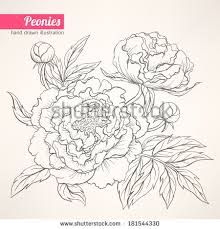 Illustration of rose sketch vector vector art, clipart and stock vectors. Peony Drawing, Peony Painting, Floral Drawing, Silk Painting, Watercolor Flowers, Watercolor Art, Drawing Flowers, Art Floral, Rose Sketch