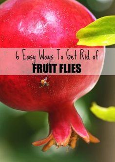 6 Easy Ways to Get Rid of Fruit Flies