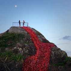 The incredible @swellsculpture Poppy Art Installation is back in 2016 as tribute to the Fallen and those still serving in the lead up to the @currumbinrsl ANZAC Day Dawn Service here at Elephant Rock Currumbin.  @swellsculpture  #currumbin #currumbinslsc #currumbinrsl #anzacday #swellsculpture #elephantrock #lestweforget #australia #australian #goldcoast #queensland #currumbinbeach #lookout #anzacpoppies by currumbin_slsc http://ift.tt/1X9mXhV