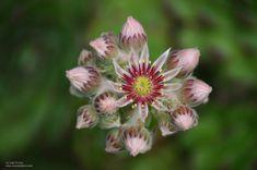 Flor Plants, Flowers, Naturaleza, Planters, Plant, Planting