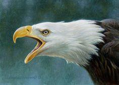 Bald Eagle Study 5x7, painting by artist George Lockwood