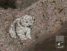 Greenpeace: White Roofs, Polar Bear