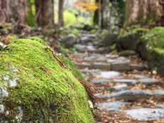 In Search of Nikko's Founder – Your Guide to Real Japan