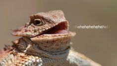 """Nuova minaccia dei Lizard Squad : """"A Natale chiuderemo Xbox Live per sempre"""""""