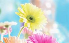 nice spring flowers - Yahoo Image Search Results