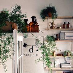 Pflanzen über der Tür