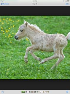 Look at the hooves. There so tiny
