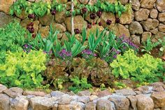 Companion Planting in Vegetable Garden