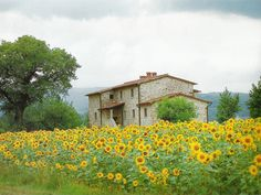 Villa in #Tuscany amid a field of blooming #sunflowers...ahhhhh