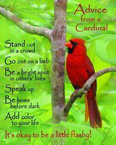 Advice from a cardinal.