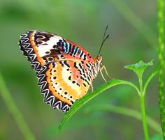 Tours of the Merlin Butterfly Sanctuary are available every Monday, Wednesday and Fridays at am. Children and adults can learn about the butterfly life-cycle and see many species. Family Friendly Resorts, Butterfly Life Cycle, Phuket, Resort Spa, Merlin, Wednesday, Thailand, Tours, Children