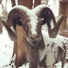 Enjoying the #snow on campus today!! #Colostate