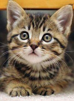 """""""The smallest feline is a masterpiece."""" —Leonardo DaVinci"""