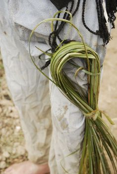 Això són lligasses. S'utilitzen per lligar les garbes que es van fent mentre s'arrenca el planter. Habitualment es porten lligades al costat de la cama facilitar la feina. Plantar, Beds
