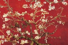 Almond Blossom - Red Juliste