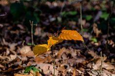 _DSC0283   Flickr - Photo Sharing! Photography Photos, Explore, Plants, Flora, Plant, Exploring