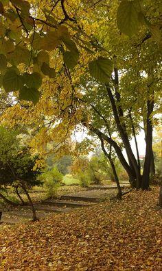 Autumn in Herăstrău  Bucharest, Romania