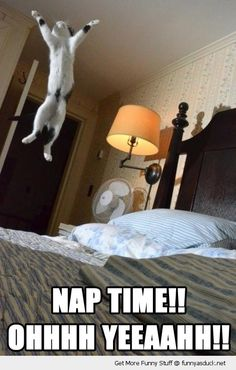 Nap Time!! Funny Cat lolcat Animal