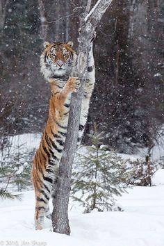 2014 nature animals, animals and pets, cute animals, nature nature, Nature Animals, Animals And Pets, Cute Animals, Wild Animals, Baby Animals, Nature Nature, Wild Nature, Beautiful Cats, Animals Beautiful