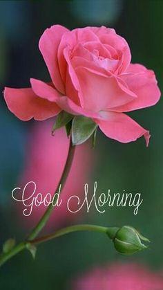 Good Morning Friends Images, Good Morning Beautiful Flowers, Good Morning Nature, Good Morning Images Flowers, Good Morning Roses, Good Morning Beautiful Pictures, Good Morning Cards, Good Morning Photos, Good Morning Gif