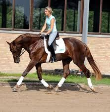 an exercise to improve throughness over the horses back.