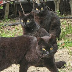 Do Cat Families Have a Hierarchical Structure?