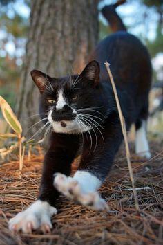 #neko #cat (via fixx02)