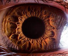 Extreme Close-Ups of Eyeballs by Suren Manvelyan | Photography | Lifelounge
