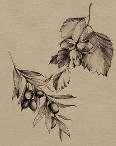 Diana Severinenko on Behance drawings vintage Botanical illustration Olive Tattoo, Olive Branch Tattoo, Tattoo Drawings, Body Art Tattoos, Small Tattoos, Tattoo Art, Floral Illustrations, Illustration Art, Tumblr Tattoo