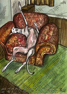 Greyhounds love to be comfortable. And, do whatever it takes!
