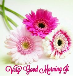 Good Morning Sunday Pictures, Good Morning Wishes Love, Good Morning Flowers Pictures, Good Morning Friends Images, Good Morning Beautiful Flowers, Beautiful Morning Messages, Good Morning Happy Sunday, Good Morning Roses, Good Morning Beautiful Images
