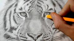 I quickly show how to draw a tiger at the beginning of the video and then the rest is about adding detail and shading to get the pencil drawing to look as re...