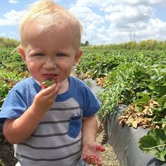 Say hello to Jett!! This DIRT-loving, fresh-from-the-ground-strawberry-eating little blonde ball of cuteness is our #mcm this week. Photo/mommy/daddy credit: our friends @ic_sarahjohnson and @ic_bjjohnson #gojettgo #smartkid #toocute #straightfromthefarm #farming #local #eatlocal #eatclean #dirteatclean #organic #sustainable #healthy #farmtotable #farmtocounter #miamibeach #southbeach #sobe #sofi #comingsoon