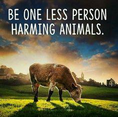 stop financing animal cruelty #vegan crueltyfree ethical healthier