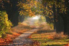 http://geniusbeauty.com/beautiful-places/amazing-roads-photos/