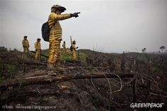 Greenpeace October 2011 Photo of the Month - 'Tiger' Activists in Sumatra