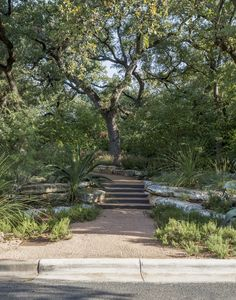 Photograph by Matthew Williams for Gardenista.    Curb Appeal: 10 Landscaping Ideas for a Low-Water Garden