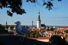 Tallinn - View from the Upper Town