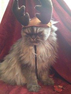 chat de compagnie en image 265 sur http://ift.tt/1oohFRS