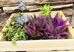 Instant dish garden: gather succulents and plop them (container and all) in a wood crate. Read more about these no-fuss plants at The Home Depot's Garden Club.