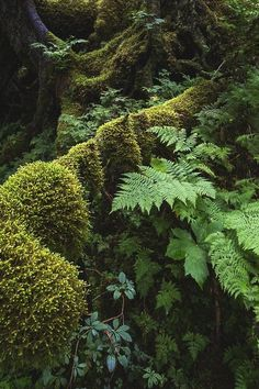 Study Joe Ganster - Forest Study, Diverse textures and shades of green in a moss-laden forest near Portage Glacier, Alaska.Joe Ganster - Forest Study, Diverse textures and shades of green in a moss-laden forest near Portage Glacier, Alaska.