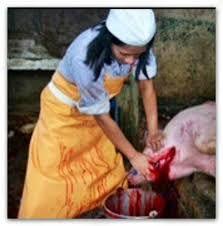 mujeres matando cerdos