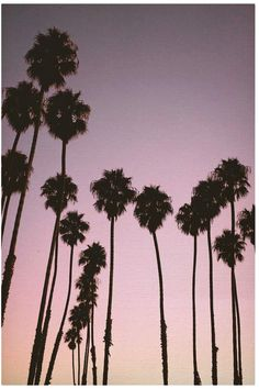 'Purple Sunset Palm Trees' Photographic Print by newburyboutique - Ropa Tutorial and Ideas Tree Line Wallpaper, Tree Wallpaper Purple, Tree Wallpaper Iphone, Nature Wallpaper, Wallpaper Backgrounds, Iphone Wallpapers, Bright Wallpaper, Fall Wallpaper, Trendy Wallpaper