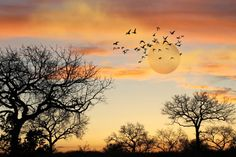 Photo Musique d'Afrique, Photographie de paysage, Photo magie du moment présent, Coucher de soleil sur Cape Town, Fine Art print, Crépuscule