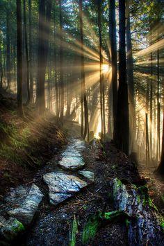 My Path - Ketchikan Forest - Alaska - USA