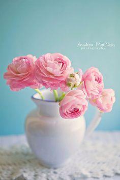 Jug Of Ranunculus | da Andrea McClain