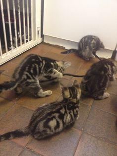 Kittens, kittens, everywhere.