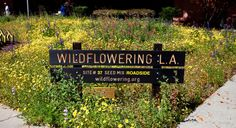 Wildflowering L.A.: Artist Fritz Haeg has planted native flower seeds at 50 highly visible sites around Los Angeles County.