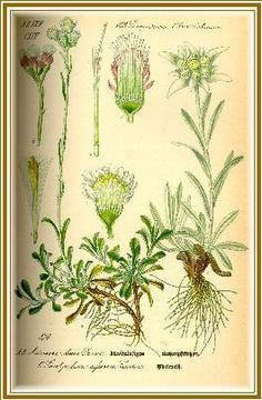 Edelweiss... small and white, clean and bright..my dad used to sing this to me.