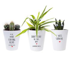 Set of 3 Cactus Plant Pots Disco Themed Gifts Planters Set | Etsy Cactus Plant Pots, Cacti And Succulents, Potted Plants, Good Luck New Job, Funny Personalised Gifts, Spider Plants, Pot Sets, Ceramic Planters, Clay Pots